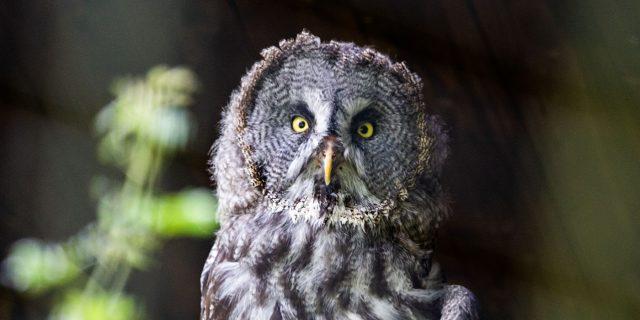 Neue Tierarten online
